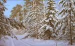Sichov Alexey - Winter Forest