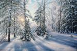 Sichov Alexey - Cold morning