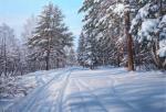 Sichov Alexey - Snowy forest