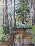 Small river and fir
