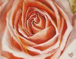 Lomakin Igor - Tender Rose