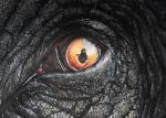 Ломакин Игорь - Глаз слона