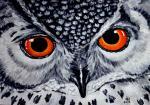 SINGHT (Screech owl)