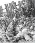 Куранда Владимир - Птичий двор (Каждый петух - король в своем курятнике)