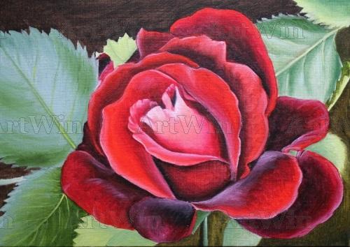 """""""Velvet rose""""."""