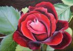 "Sosnina Tatyana - ""Velvet rose""."